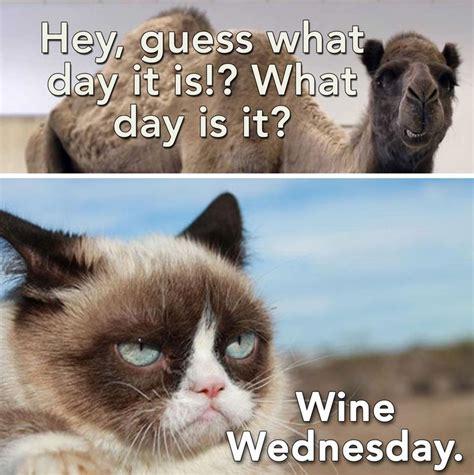 Wednesday Meme - wine wednesday grumpycat humpday wine the good life