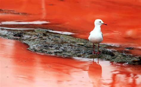imagenes de mareas rojas オーストラリアの海が紅色に染まる 赤い海をご覧あれ 写真14枚 ネタサイトz
