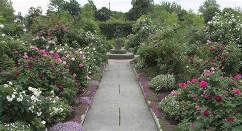 Gardens Of Western Reserve by Herb Garden With A Lot Of Roses Garden