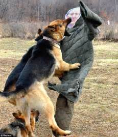 attack dogs now korea releases of dogs attacking effigy of enemy