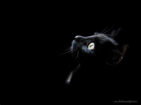 Black Kitten Wallpaper | wallpapers black cat wallpaper cave