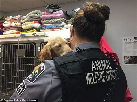 golden retriever lethargic oregon golden retriever puppy rescued after left abandoned daily mail