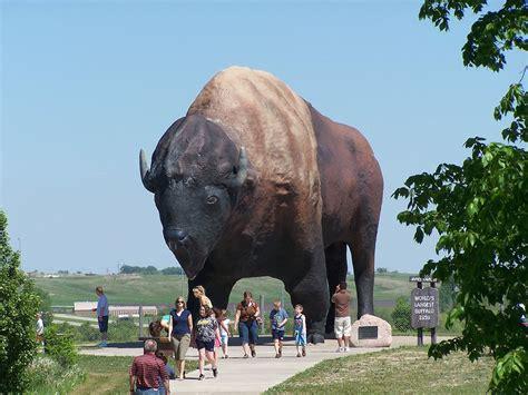 world s heaviest world s largest buffalo