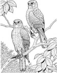 printable coloring pages for adults only bird coloring page