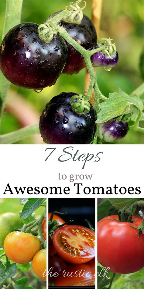 Sadly Tomatoes Are Not In Season Right Now by 9362 Best Simple Living Images On