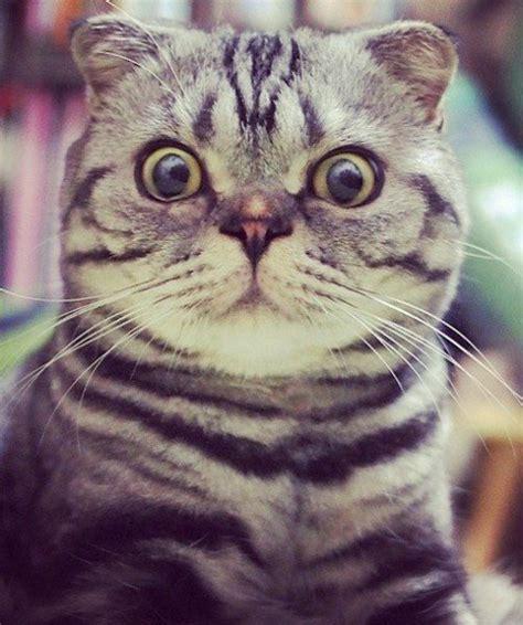 cat instagram 15 top cats of instagram 13 shishi maru
