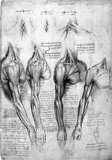 Drawing Human Anatomy by Leonardo Da Vinci Anatomist Exhibition Review 2