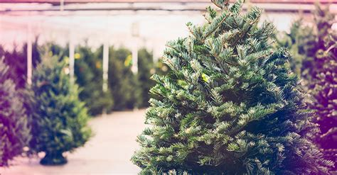 mississippi christmas tree farm sales of trees and other agricultural products exempt in mississippi
