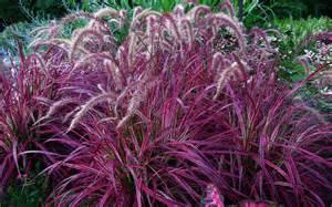 grass plants lehigh acres