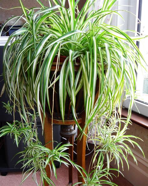 which plants can survive without sunlight 12 houseplants that can survive even the darkest corner