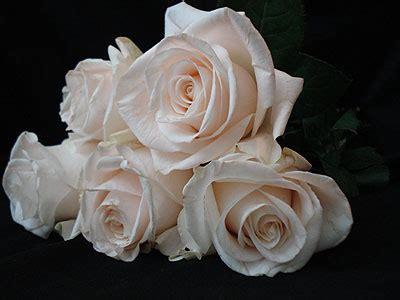 imagenes de flores blancas y negras metamorphosis design blog 25 beautiful roses images to