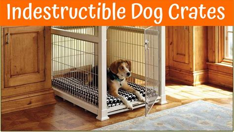 indestructible kennel large kennels best images collections hd for gadget windows mac android