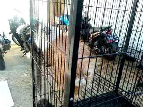 Hair Dryer Murah Untuk Kucing salon kucing doovi