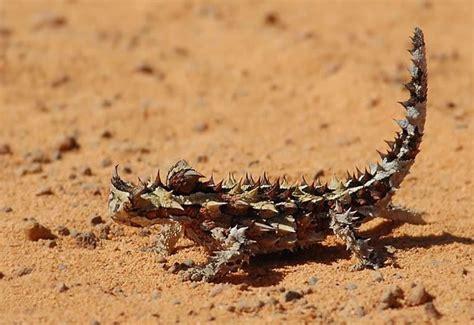 imagenes de animales del desierto animales del desierto buscar con google aqu 237 tenemos al