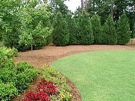 backyard trees landscaping ideas 16 best images about backyard landscaping on