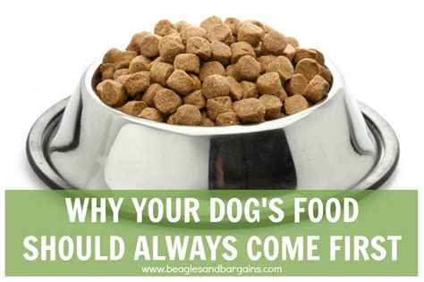 why do dogs always want food your dog s food should always come first