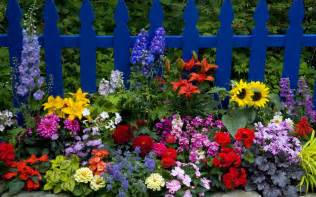 cerca con coloridas flores imagen de flores de colores