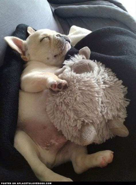 how should puppies sleep 16 unbelievably adorable puppies sleeping with their