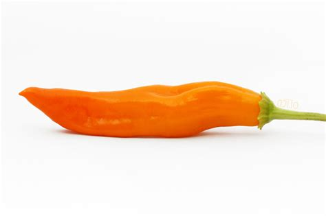 aji amarillo pepper a j 237 スパイシー