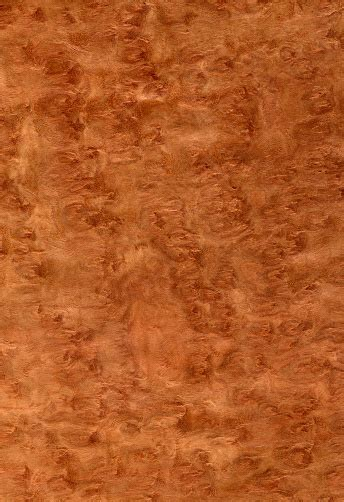 eucalyptus burl wood texture series stock photo