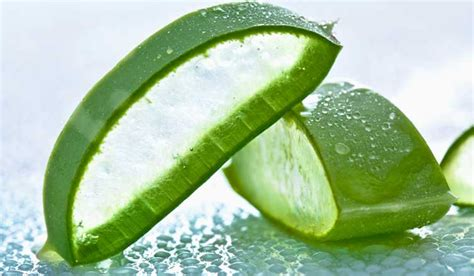 aloe vera facts aloe vera nutrition facts and health benefits