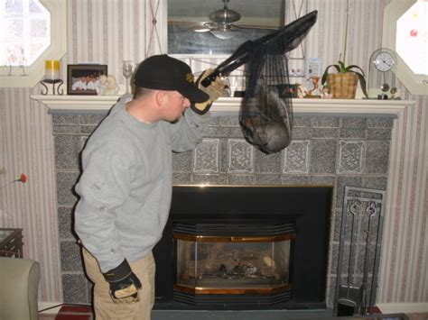 Squirrel Trapped In Fireplace by How To Identify Squirrel Damage Batguys Mass And Ri