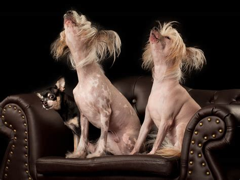 puppy singing pet photgraphy by mcqueen phodographer photography pet portraits in