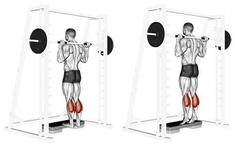 smith machine seated calf raise exercise database calves jase stuart mens health mentor