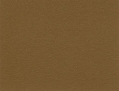 mocha color paint www imgkid the image kid has it