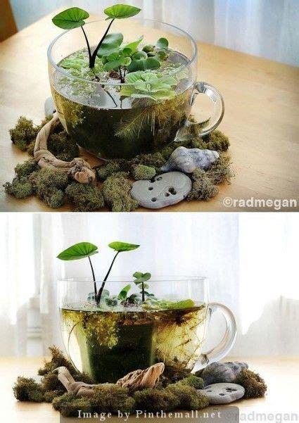 diy indoor mini water garden indoor water garden