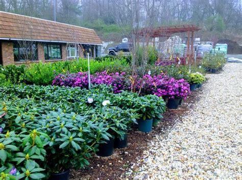 tree shop white plains nursery amodio s garden center nursery flower shop