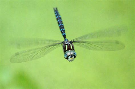 dragonfly in flight 4 photograph by ben upham iii