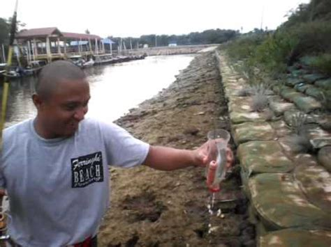 cara memancing ikan belanak rapang