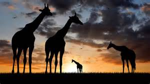 sunset tourism tourist travel twilight wallpaper wild wildlife