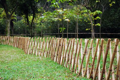 Backyard Bamboo Fencing by Fencing Archives Diy Fixated