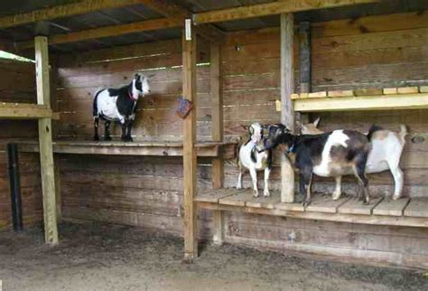 pygmy goat house plans registered nigerian dwarf goats