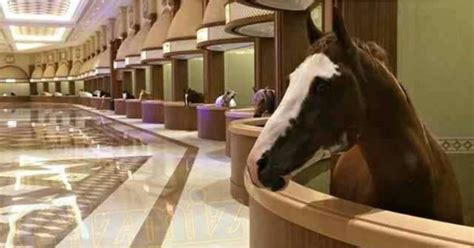 luxurious horse stable  dubai popsugar middle