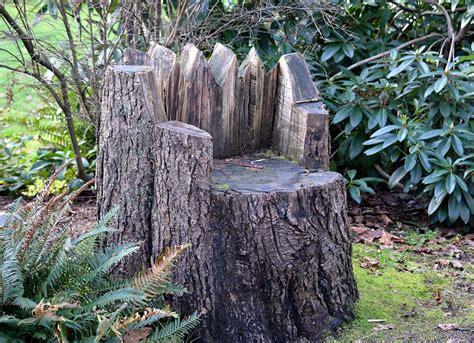 tree stump tree stump ideas that will you away bob vila