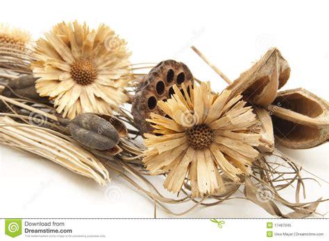 imagenes de flores secas flores secas foto de stock royalty free imagem 17487045