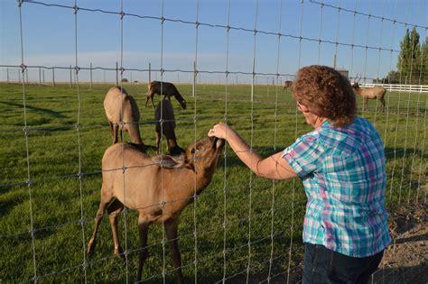 backyard ranch the jones backyard north star elk ranch wrangling a wild dream gogo papa