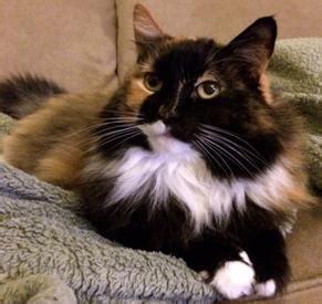 los gatos and cat hospital senior pet wellness los gatos cat hospital in los gatos ca