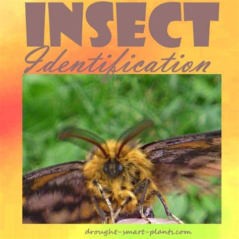 insect identification learn   identify  bugs