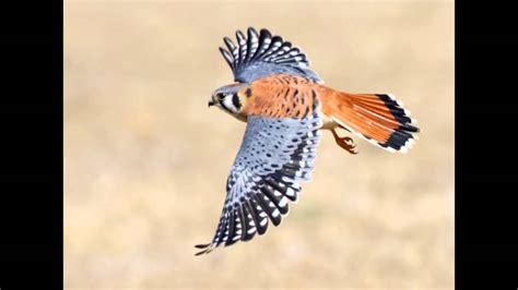 gua de aves 8428215332 aves de guatemala y sus sonidos youtube