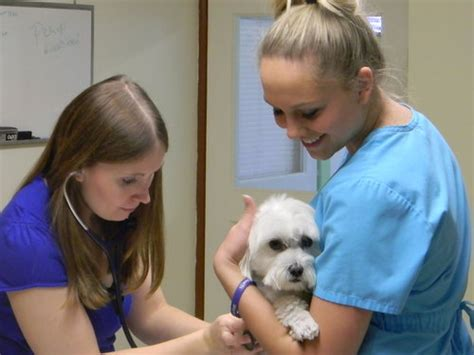Garden City Vet Clinic by Our Veterinarians In Garden City Are Accepting New
