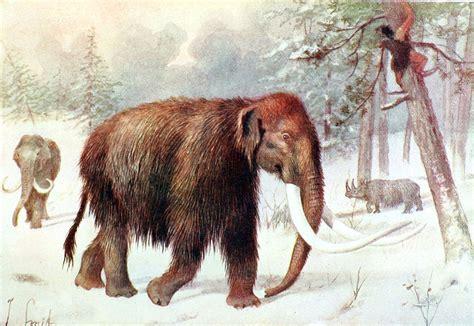 alimentazione uomini primitivi il 249 dell uomo di neanderthal pikaia