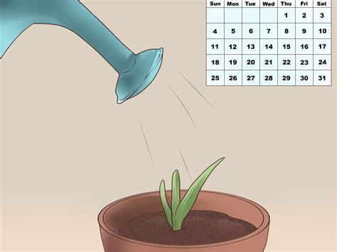 aloe vera planten wikihow