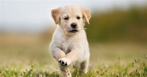 when can puppies leave owners can take paid puppy leave at this company joe ie