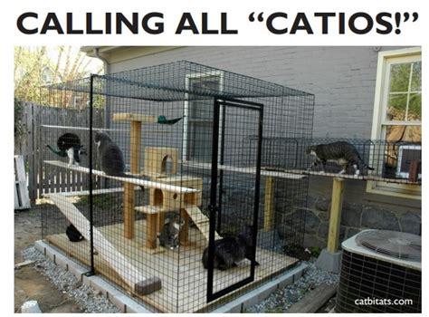 Tatakan Kandang 75 50 By Nd Pets by Calling All Catios Spot Magazine