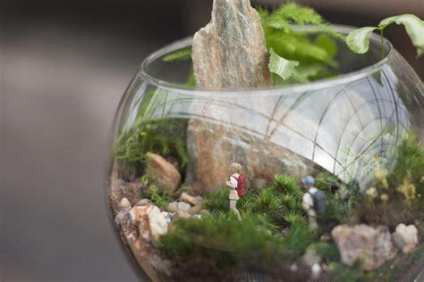 Garden Terrarium Terrariums Miniature Gardens Hoen S Garden Center