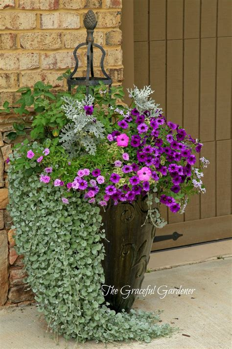 draping plants for pots 1056 best images about potted plants container plants on